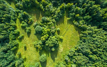 aerial image of forested area