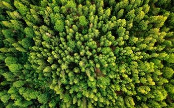 Bird's eye view of a forest of evergreen trees