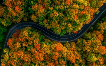 Birdseye view of road winding through forest