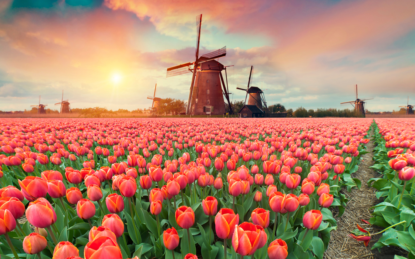 Netherlands, windmills and flowers